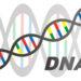 「遺伝子」「DNA」「染色体」の関係と違いをわかりやすく解説!